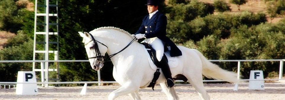 Seguro Multiriesgo para caballos de mas de 6.000€