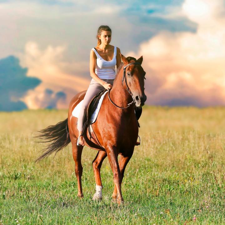 assurance responsabilite civile chevaux